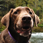 Hikingwithadopteddog