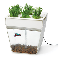 fish and planter