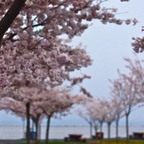 Green City Report: What to Do, Eat, and Visit in Vancouver