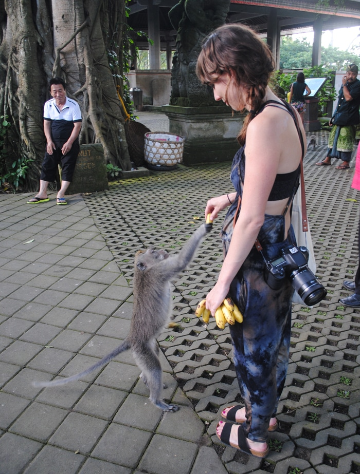Feeding a monkey at the Sacred Monkey Foreset