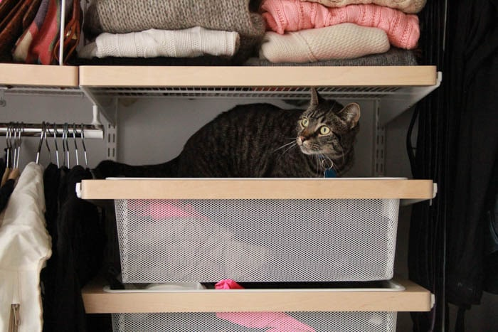 My cat Pancho hanging out in my boyfriend's sock drawer.