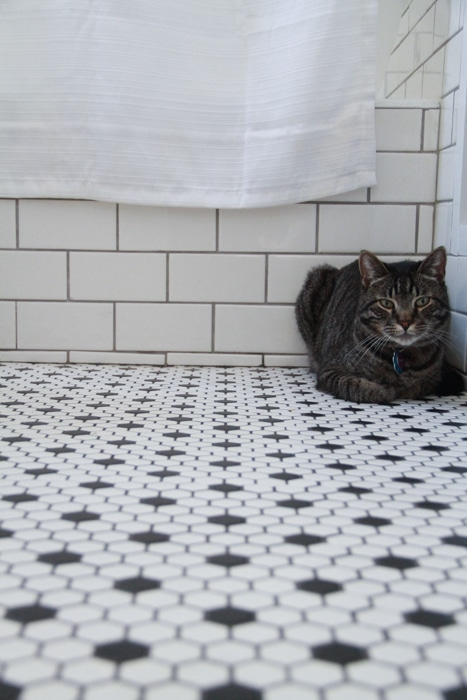 """My cat likes to """"loaf"""" in the corner of the bathroom."""