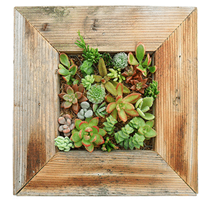 Mother's Day gift: wall planter
