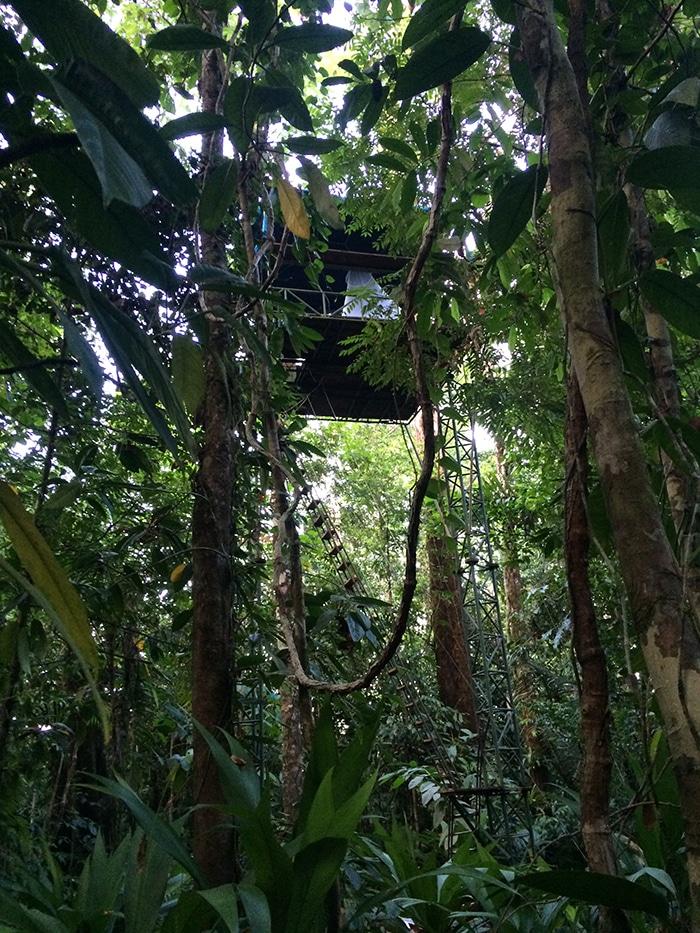 Platform 40 feet high in primary rainforest.