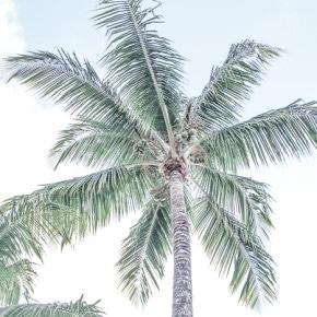 Is Coconut Oil Exploitative?