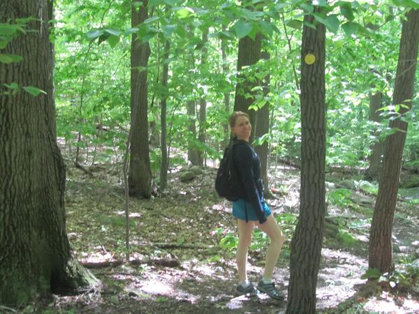 hike_rachel_forest