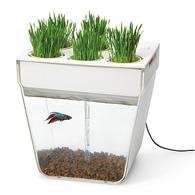 fish and planter