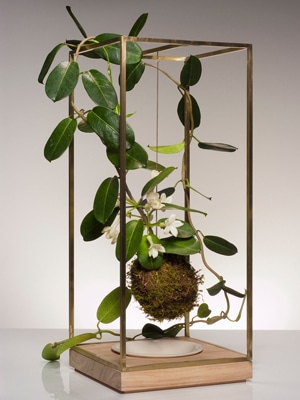 Plant Bondage live sculpture // Made in New York City