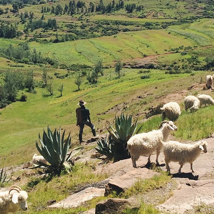 A sheepherder in Lesotho