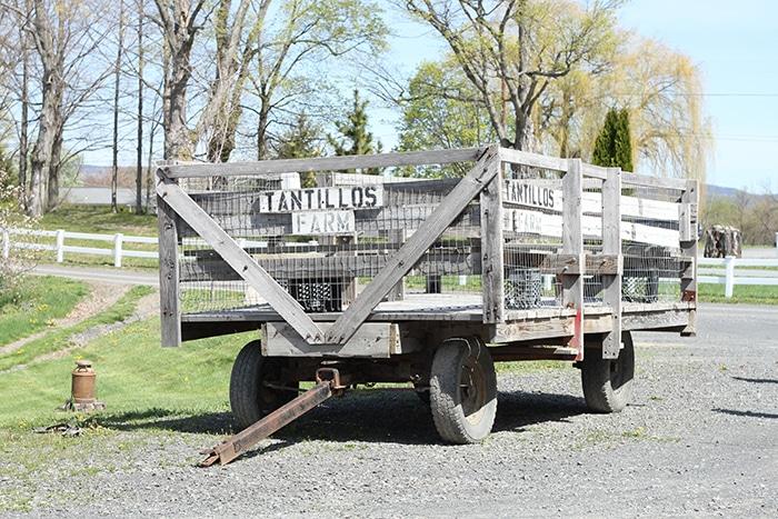 Tantillo's Farm