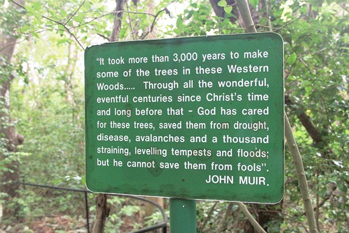 s_john_muir_quote_nature