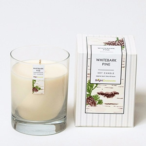 100% of proceeds support the young moms in Chicago who create this candle. Soy wax & phthalate-free fragrance