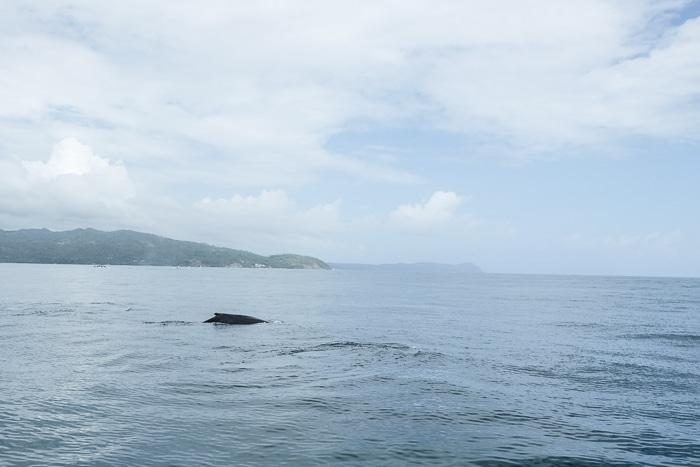 The Dominican Republic's North Coast Is an Eco-Friendly Dream