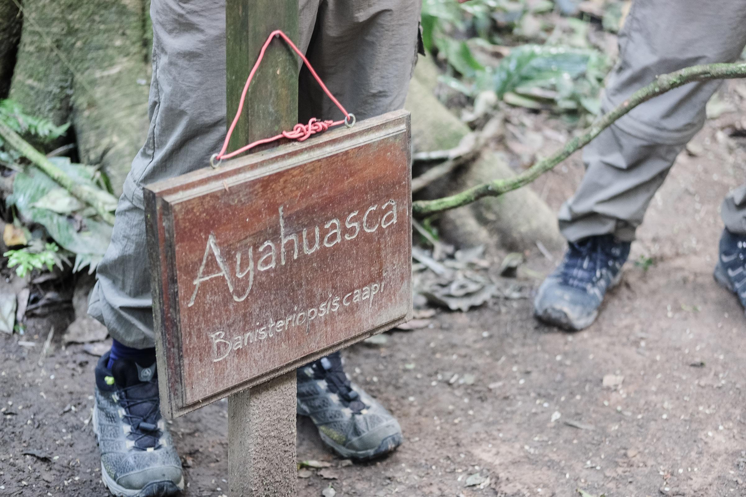 Ayahuasca Peru Amazon jungle Madre de Dios