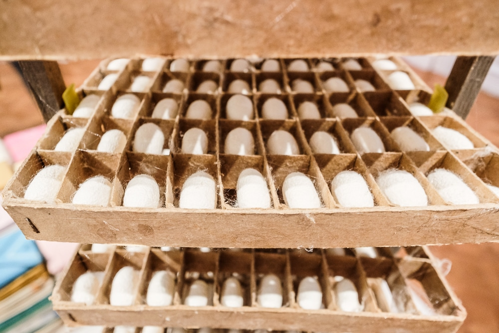 A shallow wooden box holds a grid of 45 white, oblong cocoons, each about an inch long.